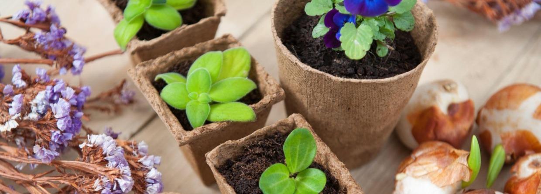 Bakjes met planten op tafel